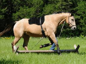 bareback pad on a horse